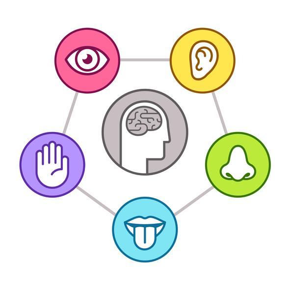 Memoria sensorial: qué es, tipos y ejemplos