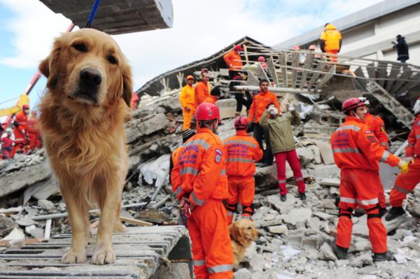 Intervención Psicológica en Catastrofes