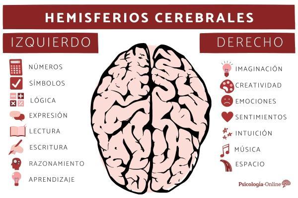 Hemisferios cerebrales derecho e izquierdo: características, funciones y diferencias