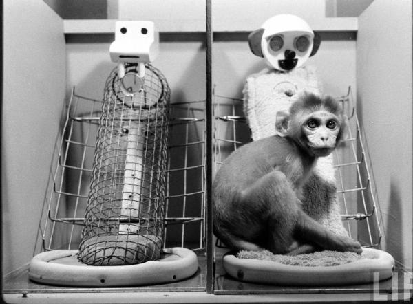 Experimentos psicológicos interesantes - El experimento de Harlow sobre el apego con macacos