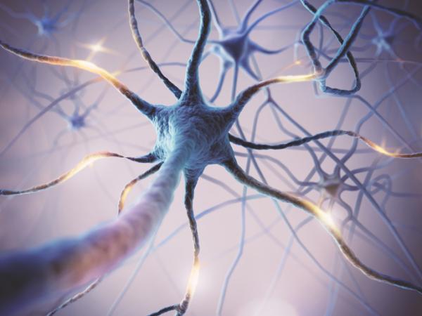 Tipos de neuronas: estructura y funciones