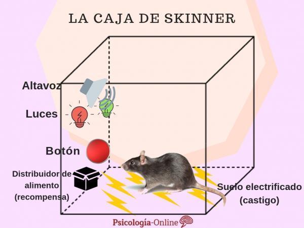 La caja de Skinner: en qué consiste este experimento