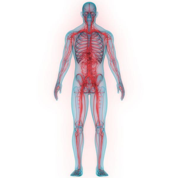 Sistema Nervioso Periférico Funciones Y Partes Con Imágenes