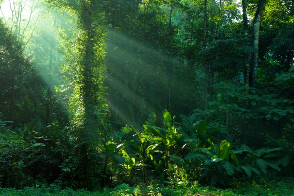 15 tipos de inteligencia - Inteligencia naturalista