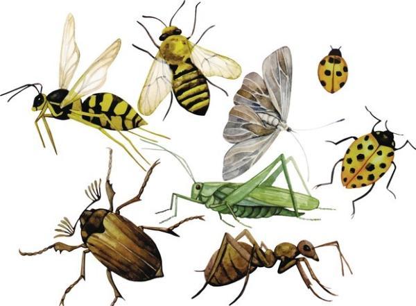 Miedo a los insectos: qué es, causas y cómo superarlo