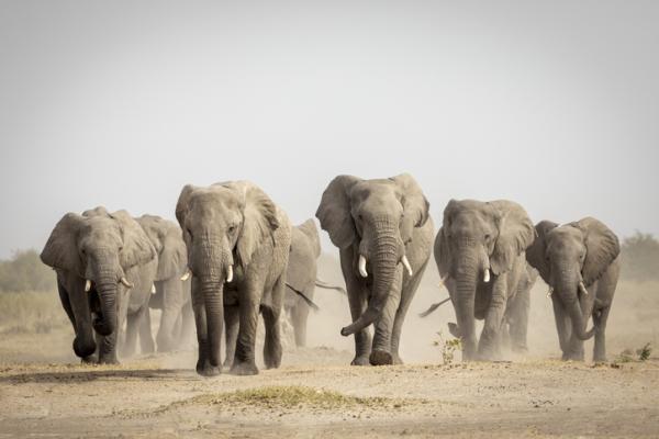 Qué significa soñar con elefantes