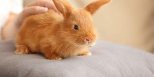 Qué significa soñar con conejos