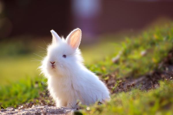 Qué significa soñar con conejos - Qué significa soñar con conejos blancos
