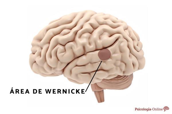 Afasia de Wernicke: qué es, síntomas, causas y tratamiento - Qué es la afasia de Wernicke