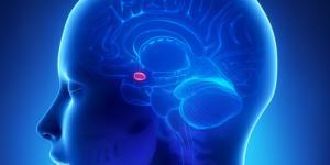 Cómo relajar la amígdala cerebral