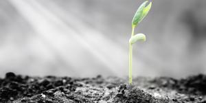 Resiliencia: aprendiendo a sobreponerse a la tragedia y a la catástrofe personal.