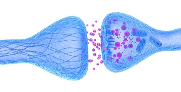 Sinapsis neuronal: qué es, tipos y cómo funciona - Estructura de la sinapsis neuronal