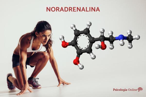 Qué es la noradrenalina y para qué sirve