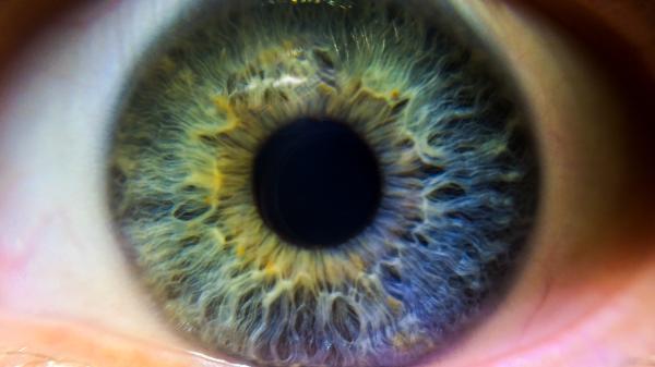 Anomalías de la Visión - Psicología básica - ¿Cómo funciona el ojo humano? -  Aspectos dinámicos de la visión