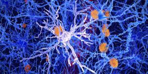 Células gliales: qué son, tipos y funciones