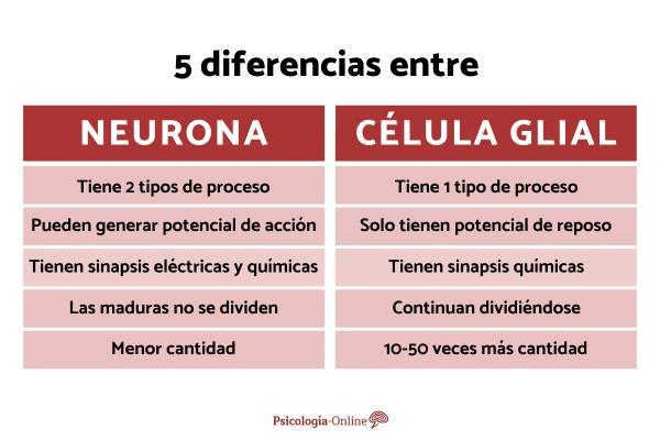 Células gliales: qué son, tipos y funciones - Diferencias entre neuronas y células gliales