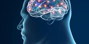 Sistema Nervioso Central: Funciones y partes