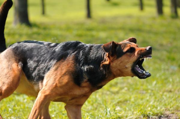 Qué significa soñar que te muerde un perro - Qué significa soñar que un perro te ataca