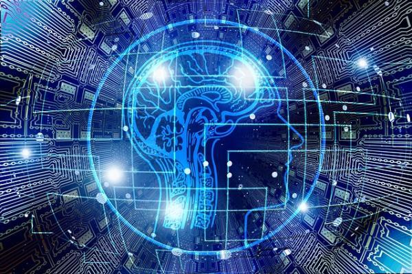 Qué es el cerebro reptiliano: partes y funciones - Partes del cerebro reptiliano