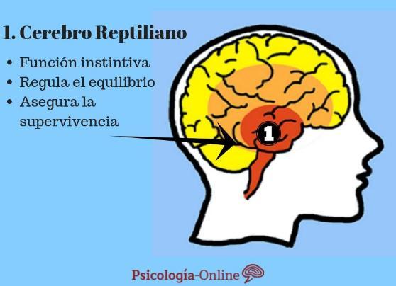 Qué es el cerebro reptiliano: partes y funciones - ¿Qué es el cerebro reptiliano?: definición