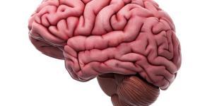 Como funciona o cérebro humano