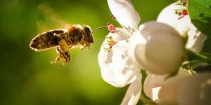 O que significa sonhar com abelha