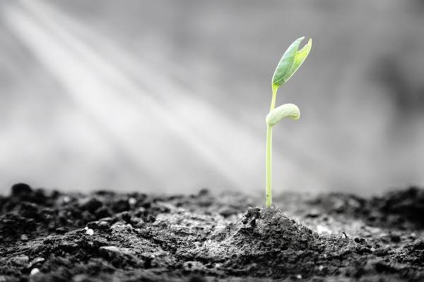 Resiliência: o que é e como ser resiliente