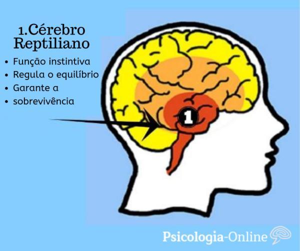 Cérebro reptiliano: o que é, características e funções - O que é cérebro reptiliano