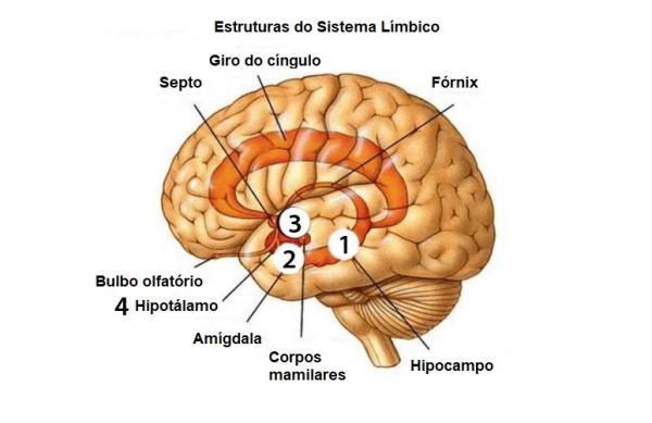 Partes do cérebro e suas funções - Como funciona o cérebro