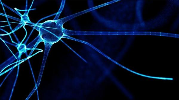 Sistema nervoso somático: o que é e sua função - Sistema nervoso somático e autônomo