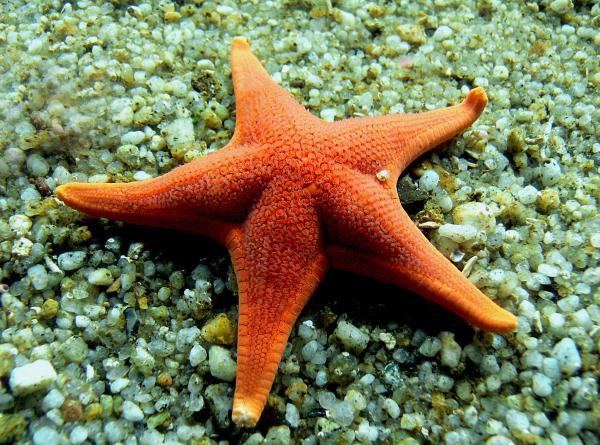 O que significa sonhar com estrelas - O que significa sonhar com estrelas do mar
