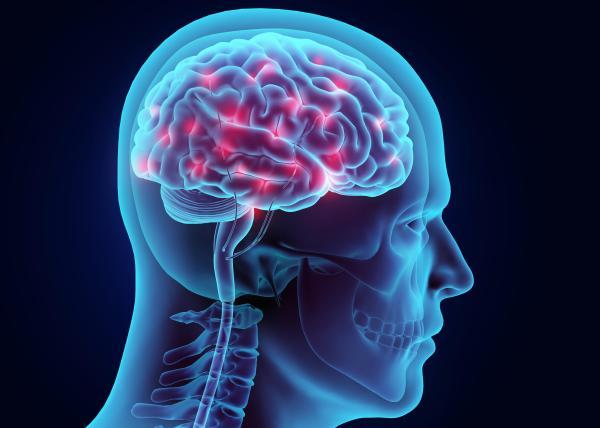 Neurotransmissores: tipos, função e classificação - O que são neurotransmissores