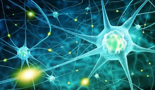 Sistema nervoso entérico e sua fisiologia - Sistema nervoso entérico: fisiologia e componentes