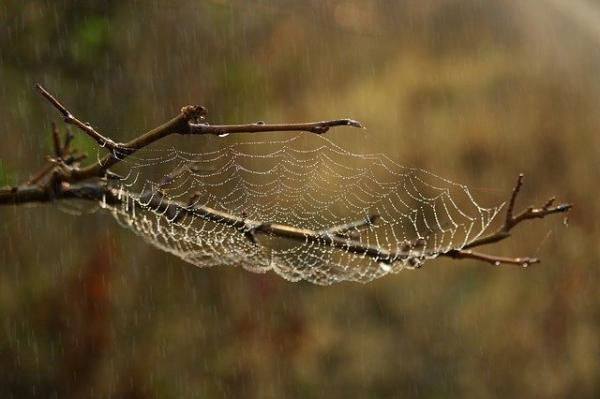 O que significa sonhar com aranha - O que significa sonhar com teia de aranha