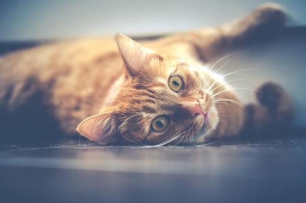 O que significa sonhar com gatos