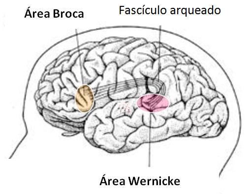 Área de Broca e Wernicke: função e diferenças - Diferença entre área de Broca e Wernicke