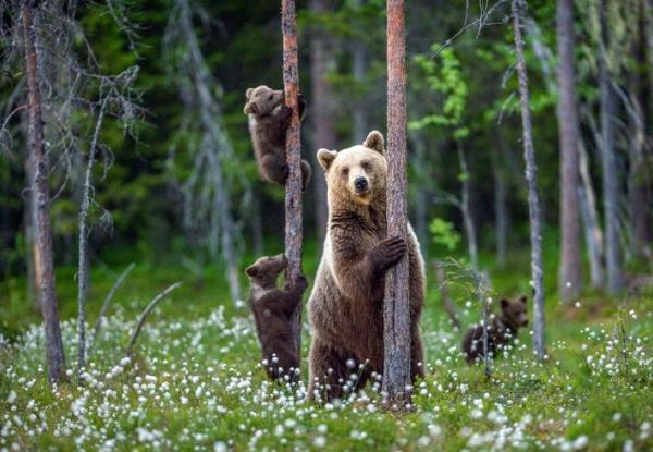 O que significa sonhar com urso