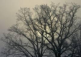 Teste da Árvore de Koch - funcionamento e interpretação - O tronco