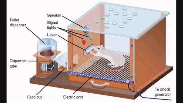 Teoria de Skinner: behaviorismo e condicionamento operante - A caixa de Skinner