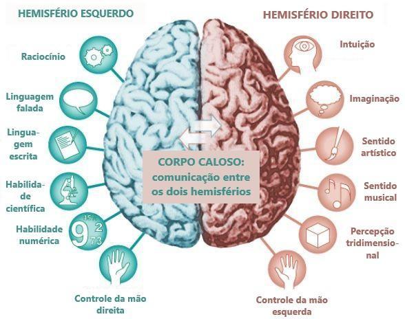 Córtex cerebral - áreas e funções corticais - Córtex cerebral e os hemisférios cerebrais