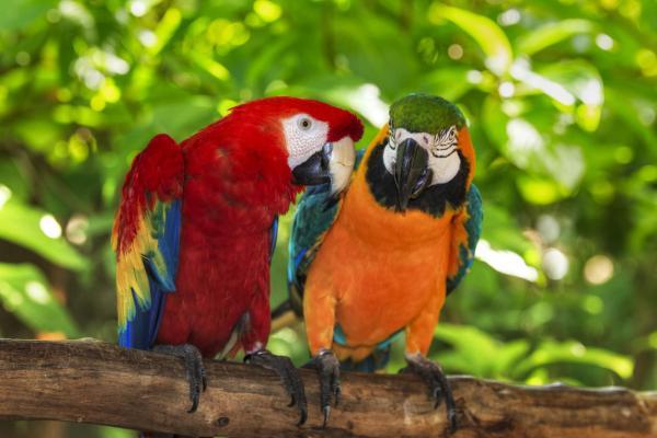 O que significa sonhar com pássaros - O que significa sonhar com pássaros coloridos