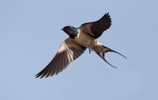 O que significa sonhar com pássaros - O que significa sonhar com pássaros em gaiolas