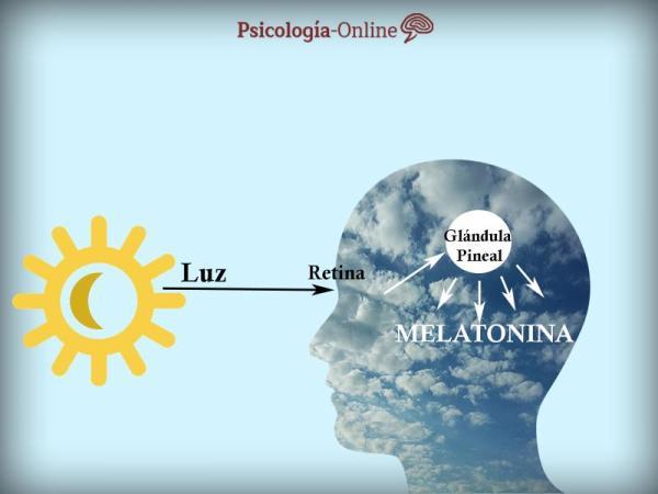 Melatonina para dormir: dosagem, contraindicações e alimentos - Melatonina para dormir: como funciona