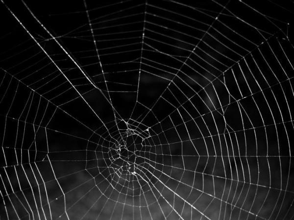 As 15 fobias mais comuns e sua definição - 12. Aracnofobia