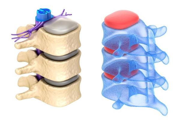 Sistema nervoso periférico: função e anatomia - Sistema nervoso periférico: anatomia