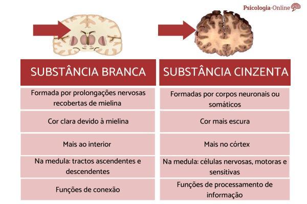 Diferença entre substância branca e a cinzenta do cérebro