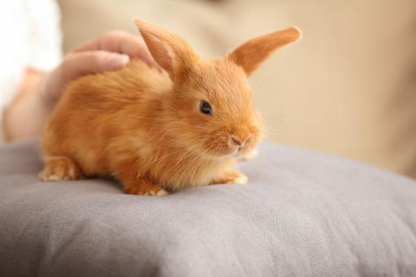 O que significa sonhar com coelho