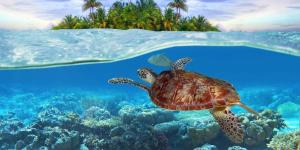 Significado de sonhar com tartaruga