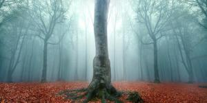 Teste psicológico do bosque